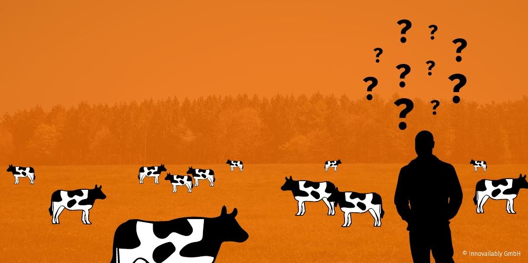 Weide gleich gebrandeter Kühe